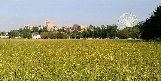 windsor meadow